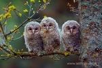Blekinges djur- och fågelliv